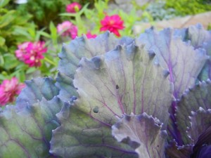 Cabbage and flowers[7-2]