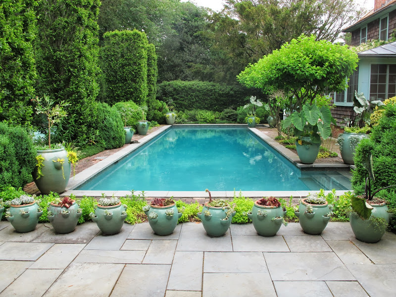 potted plants around pool - the best plants 2017