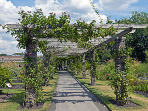 Rose_Pergola_at_Kew_Gardens