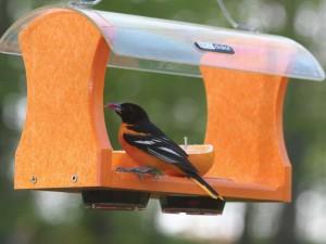 Bird_Feeders_4730