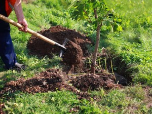 how-to-plant-a-tree-214337929-1280