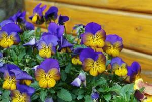 spring-2211353_1280