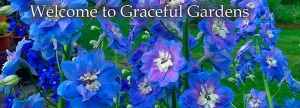 Delphiniums-Graceful-Gardens-Welcome-flexslider