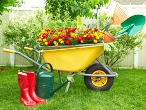 wheelbarrow-tools-flowers-SS_258613808