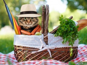 cat-in-picknic-basket-tease-today-160707_223dea254685cd15dc97d32e1e943cb5.today-inline-large