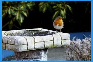 Bird-Bath-02