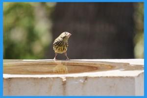 Bird-Bath-05