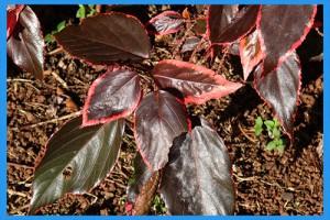 Copper-Plant