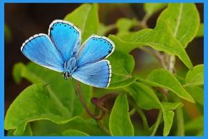 Spring-Azure