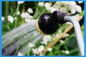 Watering-Wand