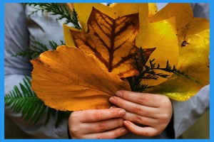 2.Collect-colorful-leaves.