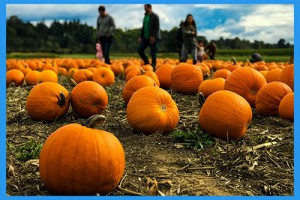 23.Go-to-a-pumpkin-patch.