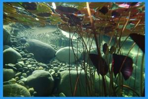 underwater-1529206_1280