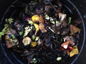 My compost bin after 6 months.