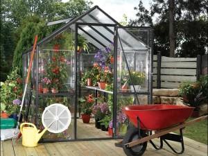 Greenhouse-6542