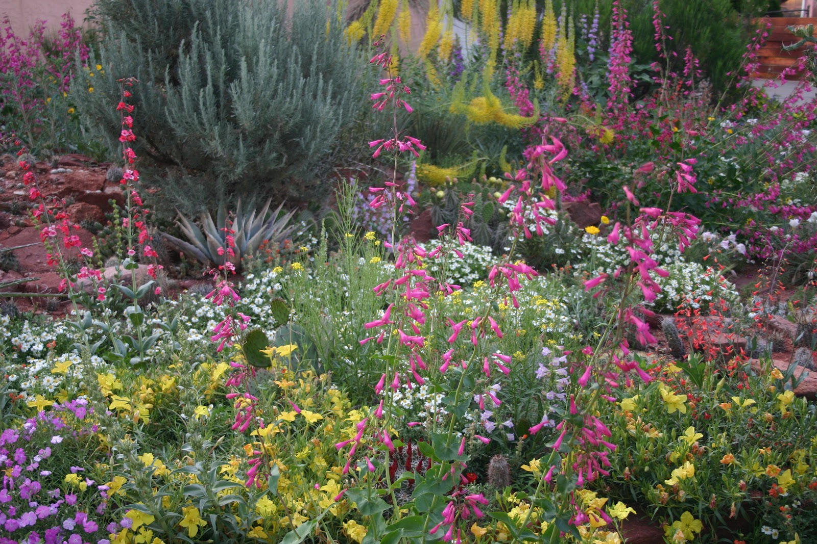 What Is Xeriscaping? - Fifthroom Living Xeric Garden Designs Html on