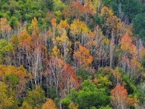 autumn-5904398_1280