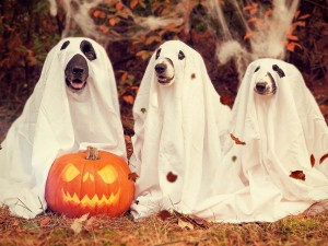 Trick-or-treating dogs